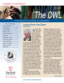Owl - Winter 2010